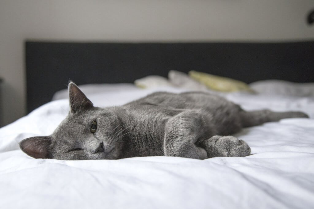 Nachtruhe-cat-1818927_1920_Pixabay